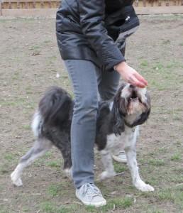 Dogdancing 2