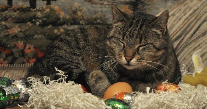 Katze Ostern