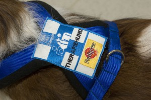 Hund mit Logo