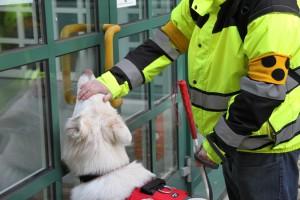 TiertrainerInnen-Ausbildung
