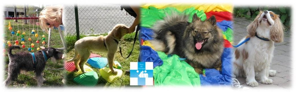 Start Sommer-Vorbereitungskurs Mittwoch Welpen @ TAT Zentrum für Mensch-Tierbegegnung | Wien | Wien | Österreich