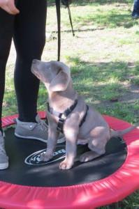 Beginn TAT-Welpenvorbereitungskurs @ TAT Zentrum für Mensch-Tier-Begegnung