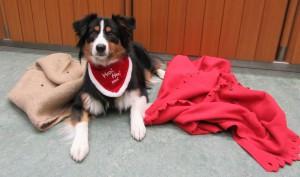 Tara ist bereit für die Deckensuche.