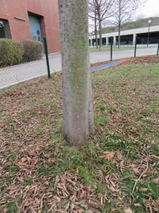 Der mit Hunde-Leberwurst bestückte Baum.
