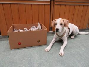 Turbo ist bereit für SEINE Schnüffelkiste und wartet nur auf das Startsignal.