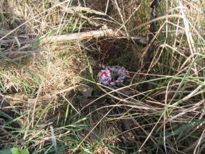 Das Spielzeug ist gut versteckt im Gras.