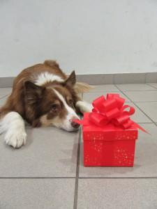 Felix wartet darauf, dass er das Geschenk öffnen darf!