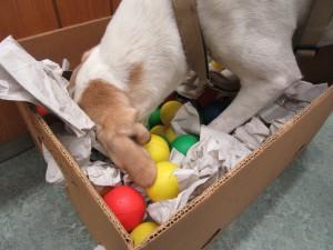 Turbo zeigt vollen Schnüffel- und Körpereinsatz und hat viel Spaß dabei!