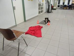 Tara wartet auf dem Teppich auf das Startsignal.