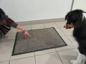 Leckerlis werden auf den Teppich gelegt. Tara schaut interessiert zu.