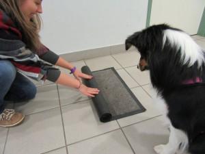 Dann wird der Teppich zusammengerollt.