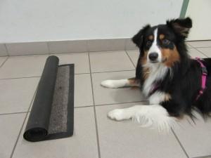 Ein Stück des Teppichs bleibt un aufgerollt liegen. Dort wird auch ein Leckerli versteckt.
